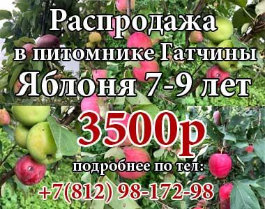 Яблони 7-9 лет по 3500р